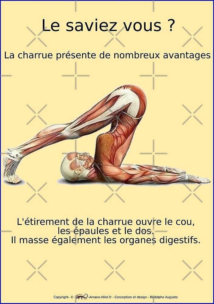 « Planches Musculo-squelettique des positions de Yoga - N°16 » par rodolphe Augusto