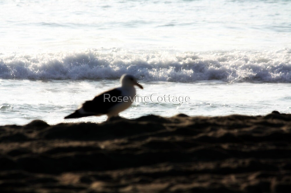 Seagull On The Beach by RosevineCottage