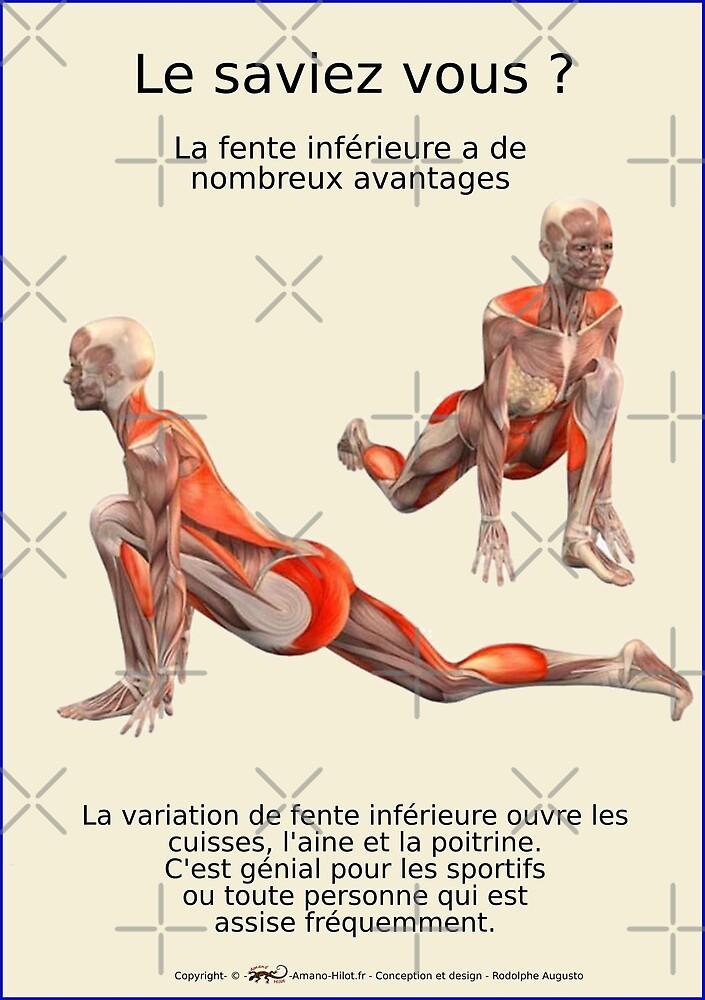 « Planches Musculo-squelettique des positions de Yoga - N°25 » par rodolphe Augusto