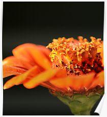 Flower in Motion Poster
