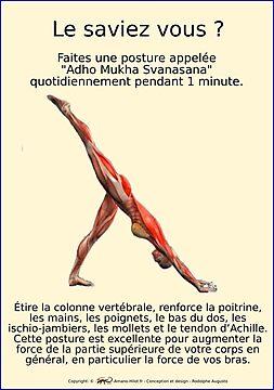 Planches Musculo-squelettique des positions de Yoga - N°27