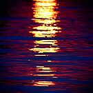 Sunshine On Linyanti by Didi Bingham