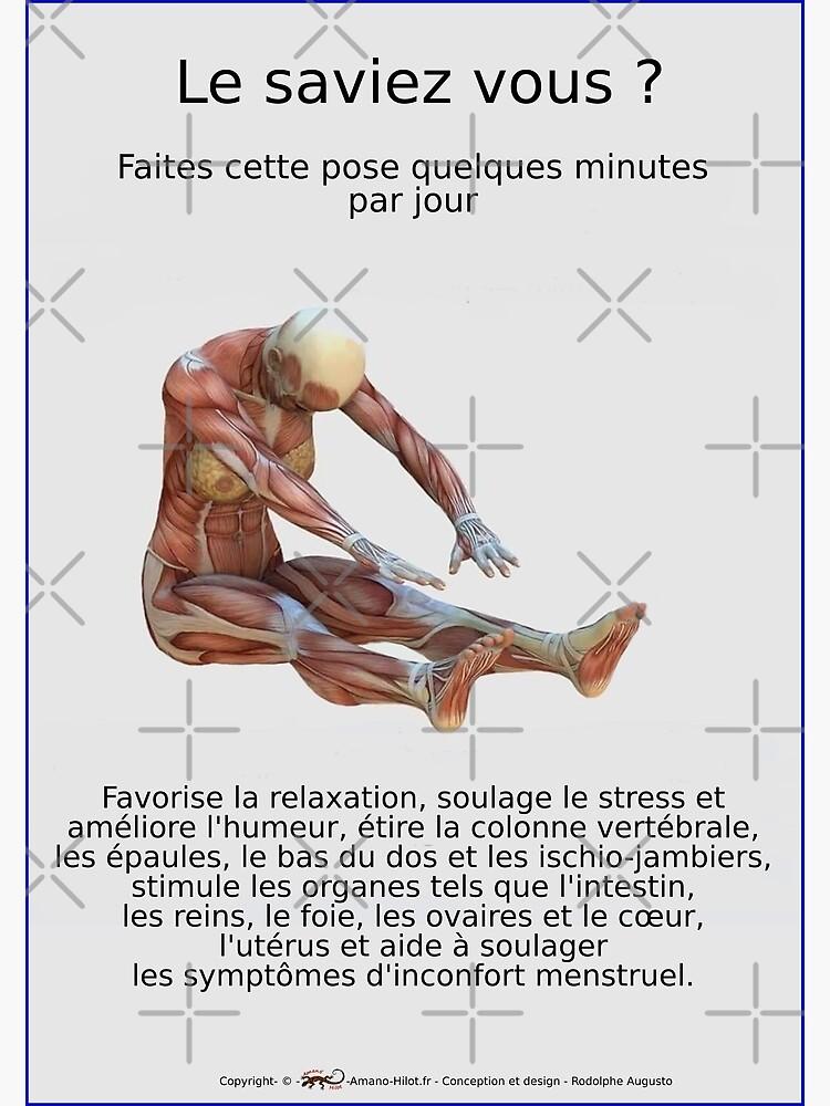 «Planches Musculo-squelettique des positions de Yoga - N°33» par rodolphe-a