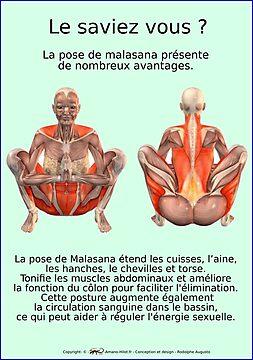 Planches Musculo-squelettique des positions de Yoga - N°34