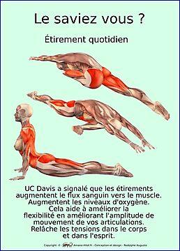 Planches Musculo-squelettique des positions de Yoga - N°35