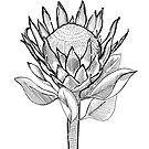 King Protea by h-creative