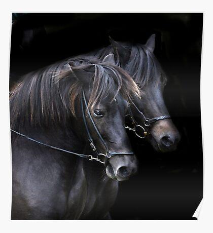 Ponies in the dark Poster