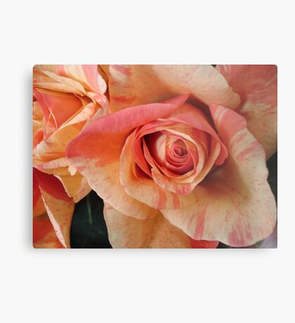COLOR SPLASH ROSES Metal Print
