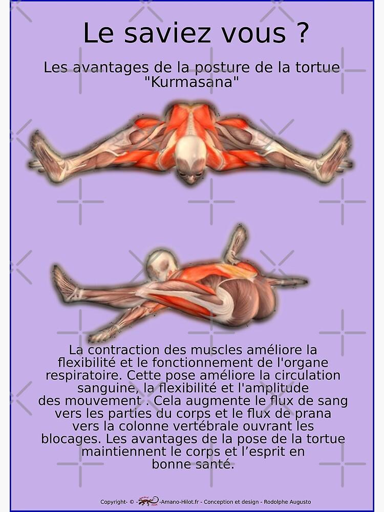 «Planches Musculo-squelettique des positions de Yoga - N°39» par rodolphe-a