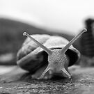 X Snail by marcopuch