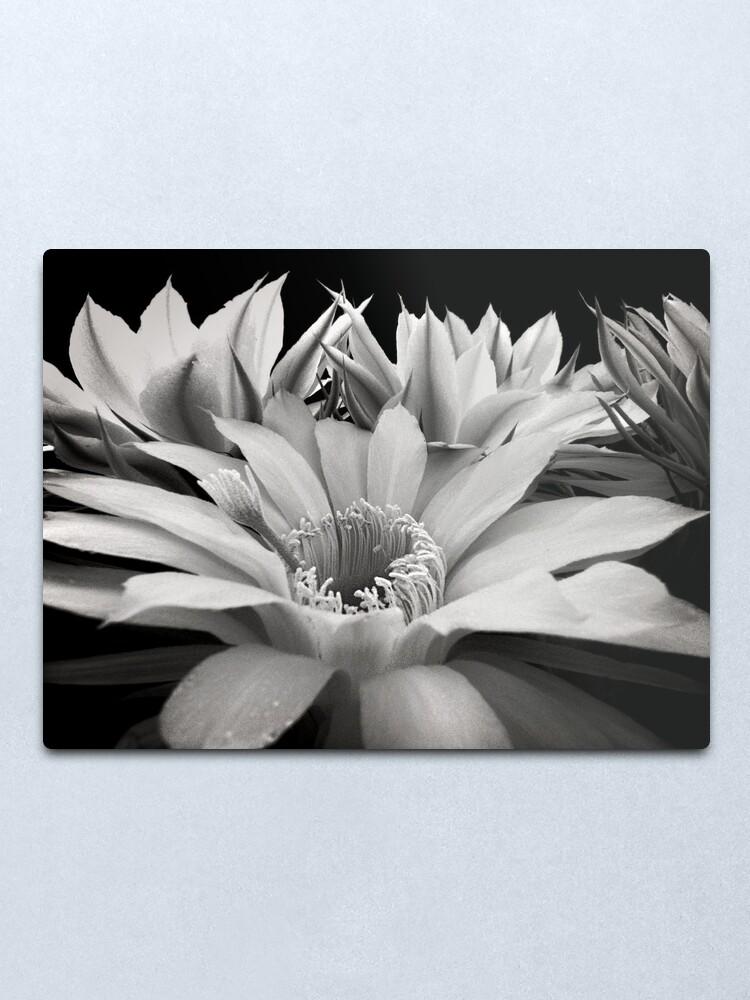 Alternate view of Cactus Flowers Metal Print