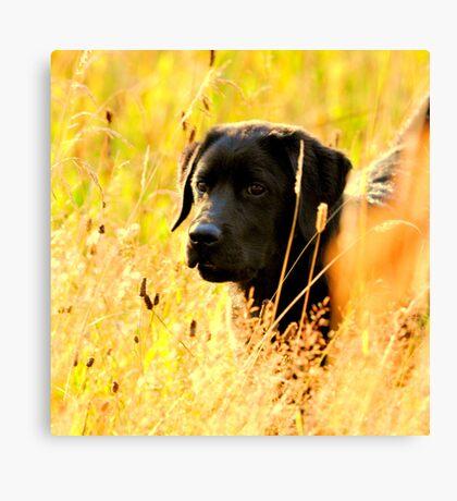 Puppy days Canvas Print