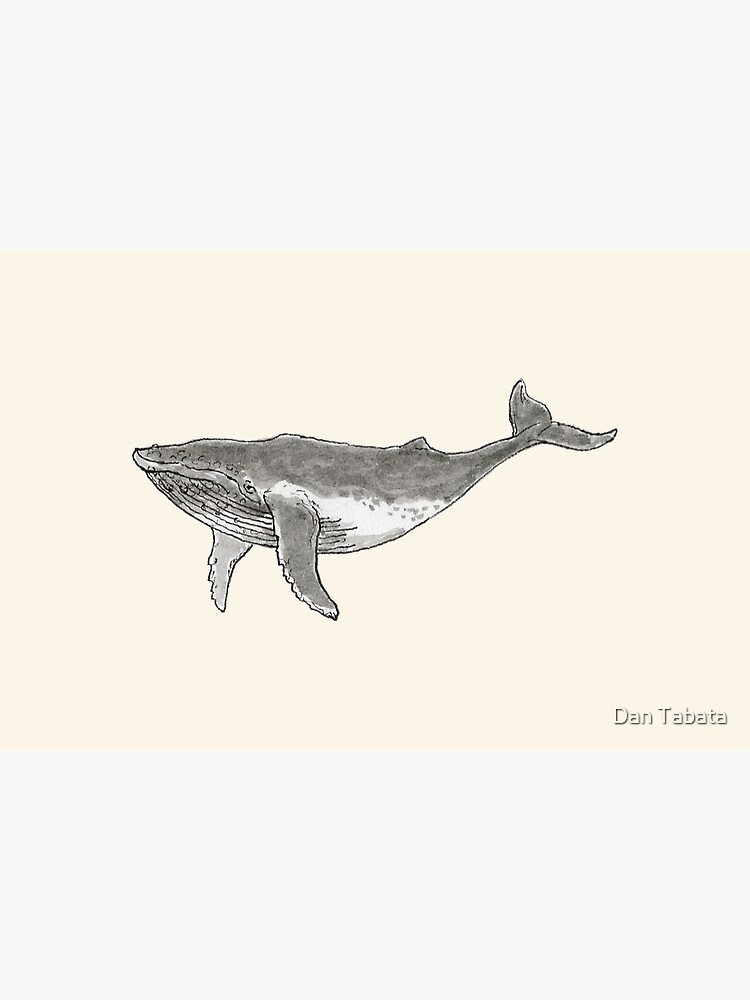 Humpback Whale by dmtab