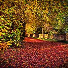 Autumn's Carpet by Gareth Jones