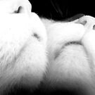Cat's Narcissism 4 by Kristin Sparks