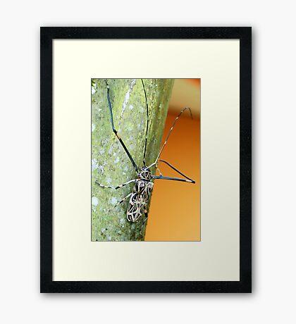 Harlequin Long-Horned Beetle (Acrocinus longimanus) - Costa Rica Framed Print