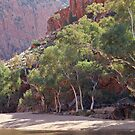 River Gums of Ormiston Gorge by Steven Pearce