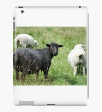 Ba Ba Black sheep  iPad Case/Skin