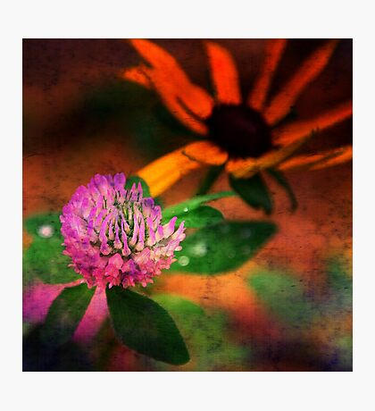 One Little Clover Photographic Print