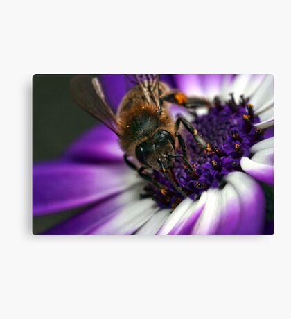 Bee in the Midst.  Canvas Print