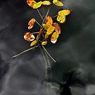 La fleurs by Sandra Guzman