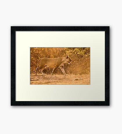 THE LIONESS - in full Sunset charge Framed Print