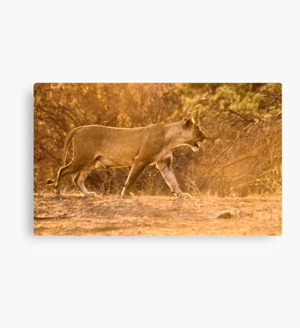 THE LIONESS - in full Sunset charge Canvas Print