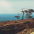 Torrey Pines by deepbluwater