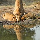 Family thirst quenching! by Anthony Goldman