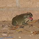 """""""Blahh, Sour bugs"""" Toad by Sherry Pundt"""