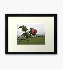 The 1st raspberry Framed Print