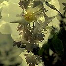 His  Glory by Lozzar Flowers & Art