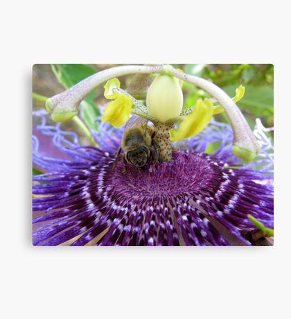Bee~autiful Passion Flower Canvas Print