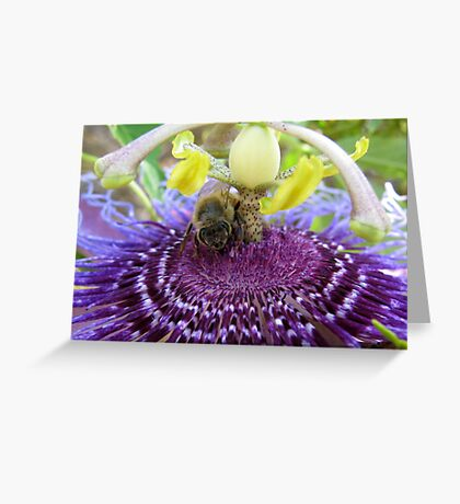 Bee~autiful Passion Flower Greeting Card