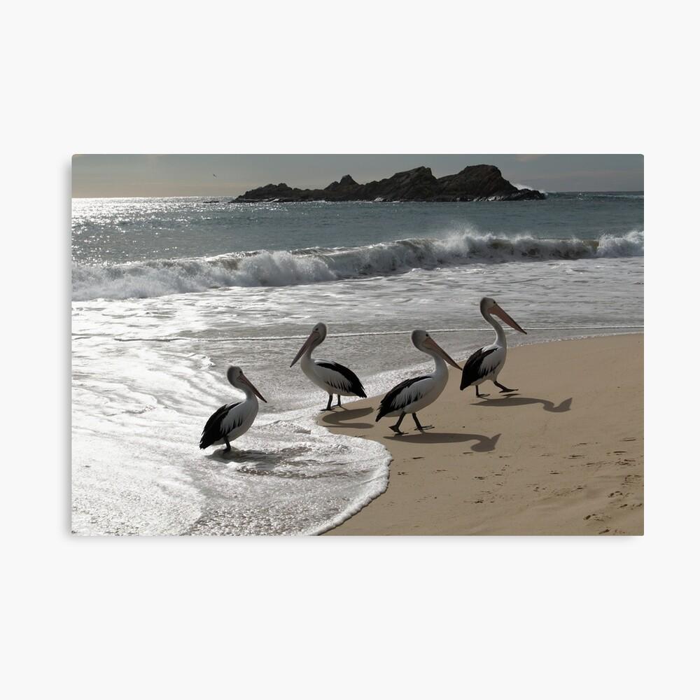 Four Pelicans Casting their Shadows on Seal Rocks Beach Canvas Print