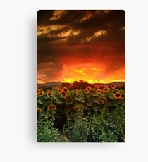 August Sunflower Skies Canvas Print