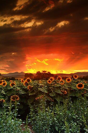 August Sunflower Skies by John  De Bord Photography