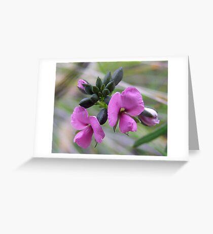 Gompholobium Knightianum Greeting Card