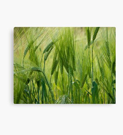 Views 5201 ♥ ♥ ♥ ♥ series . Green Green Grass Of Home. Tom Jones & Brown Sugar Story.  Canvas Print