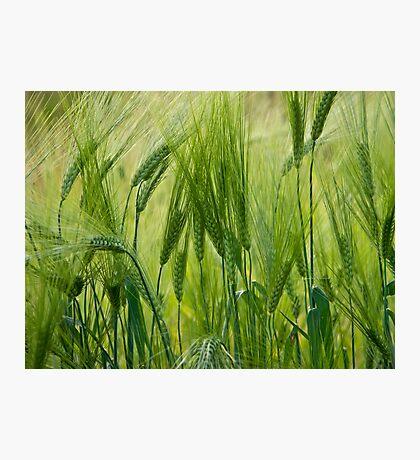 Views 5201 ♥ ♥ ♥ ♥ series . Green Green Grass Of Home. Tom Jones & Brown Sugar Story.  Photographic Print
