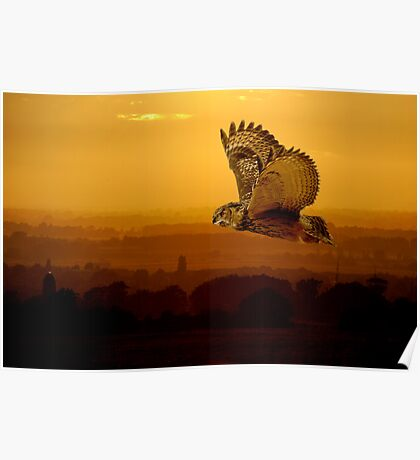 Eagle owl and the sunset Poster