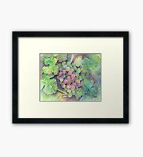On The Vine Framed Print