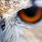Nosey Owl - Bengal Eagle Owl by Derek McMorrine