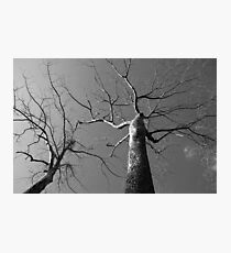 Huge Trees in Cambodia | Black & White Travel Photography Photographic Print