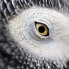 Yellow Eye - African Grey Parrot by Derek McMorrine
