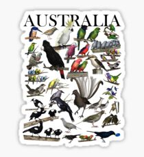 Birds of Australia 1 Sticker