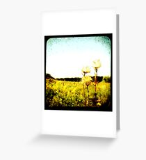 TTV Fields Greeting Card