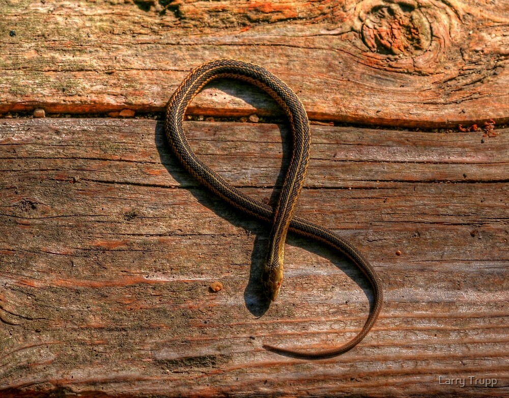 """""""Figure Eight Position"""" by Larry Trupp"""