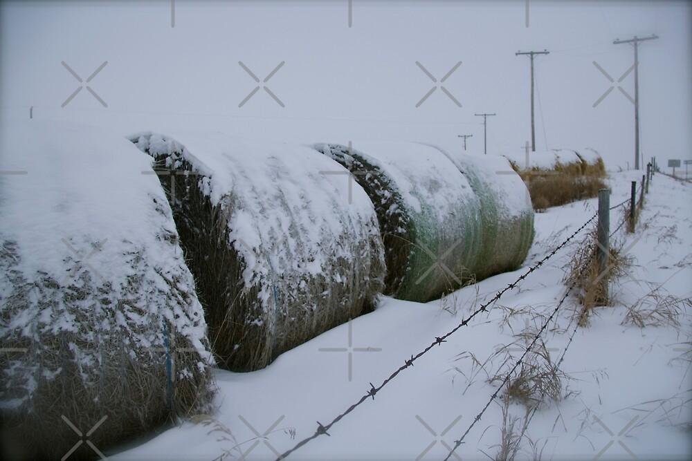 Saskatchewan Hay Bales  by Raquel Fletcher