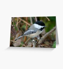 Chickadee in Autumn: Double Grip Greeting Card